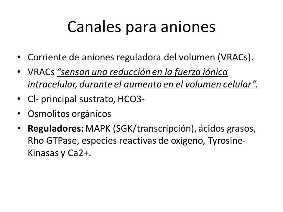 Canales para aniones Corriente de aniones reguladora del volumen (VRACs).