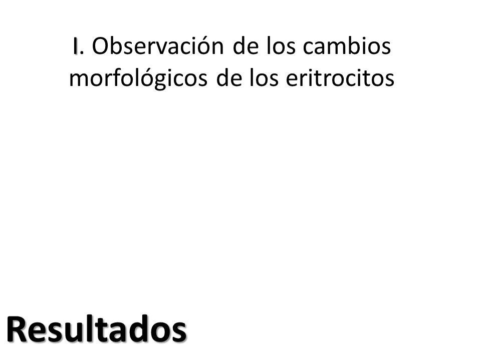 I. Observación de los cambios morfológicos de los eritrocitos