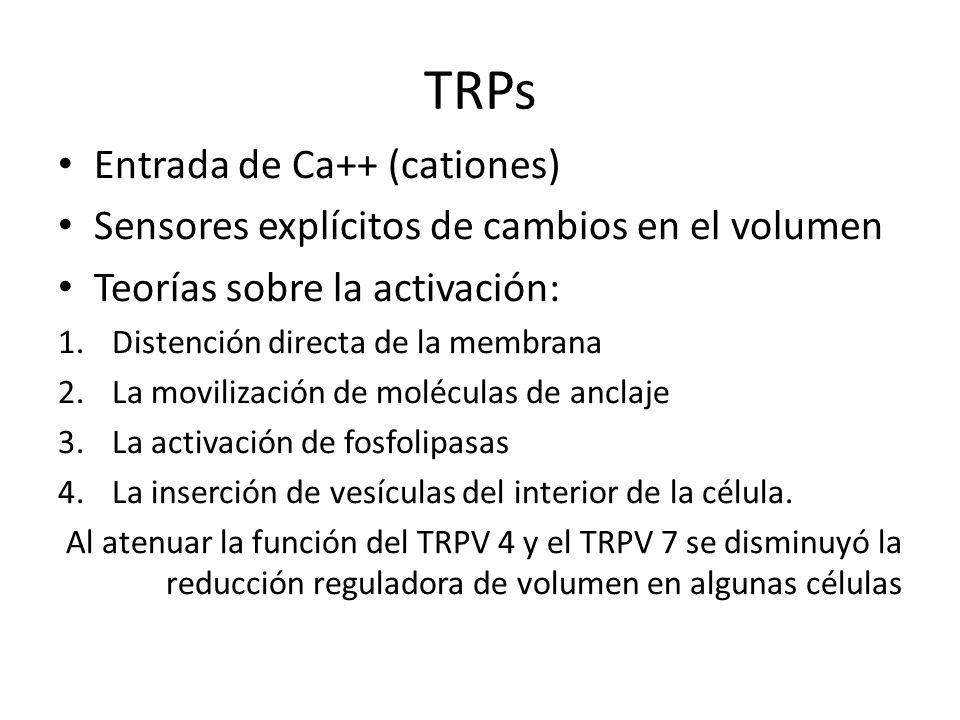 TRPs Entrada de Ca++ (cationes)