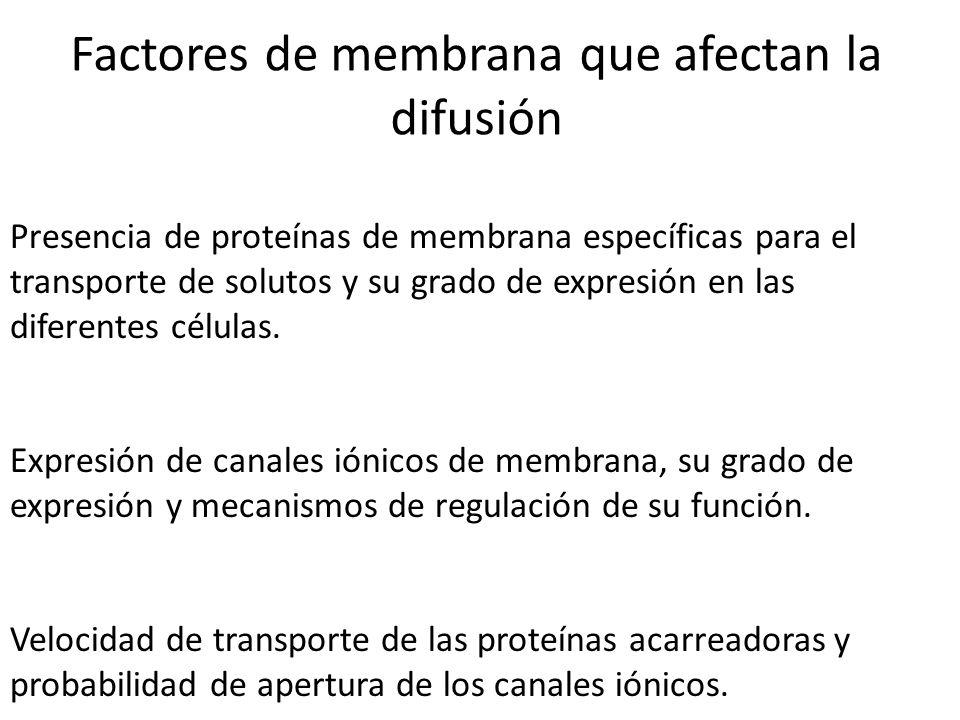 Factores de membrana que afectan la difusión