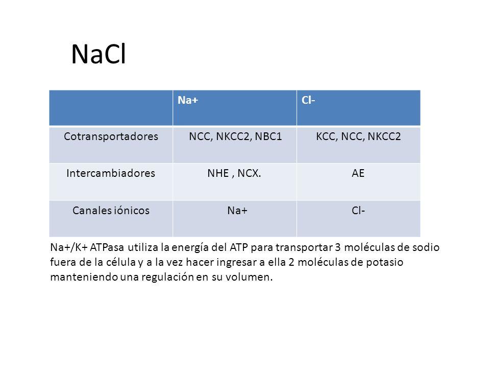 NaCl Na+ Cl- Cotransportadores NCC, NKCC2, NBC1 KCC, NCC, NKCC2