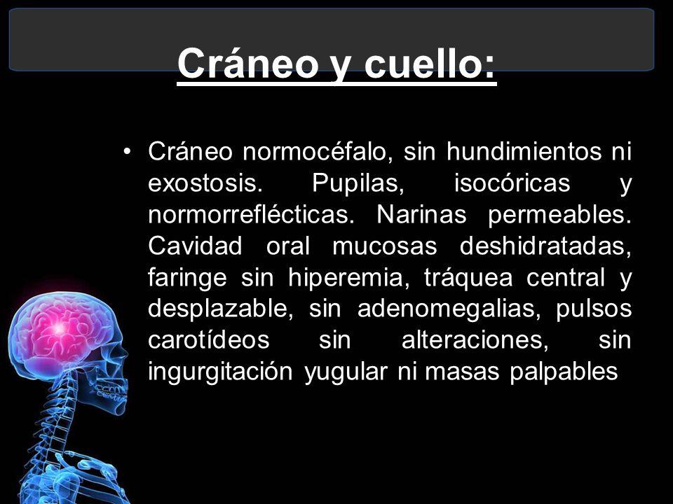 Cráneo y cuello: