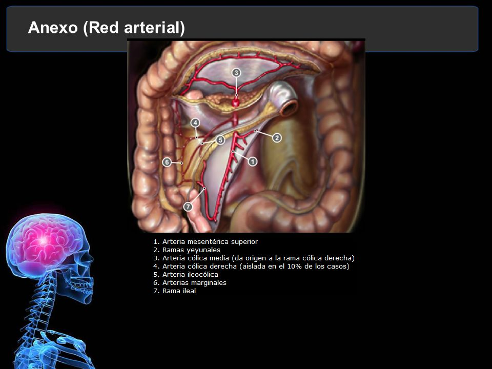 Anexo (Red arterial)