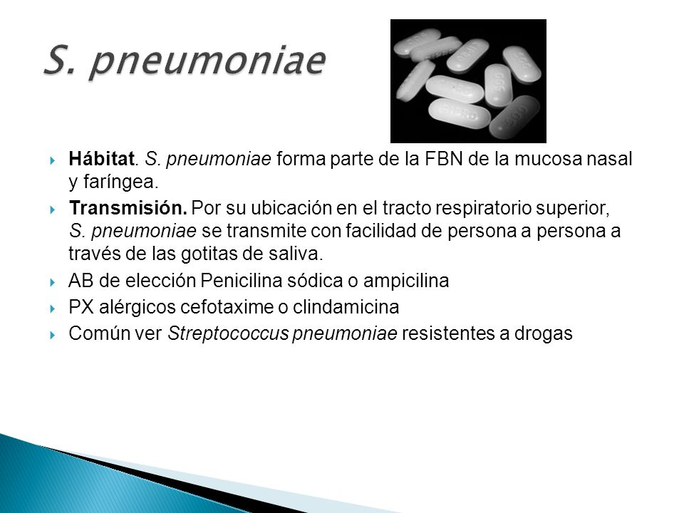 S. pneumoniae Hábitat. S. pneumoniae forma parte de la FBN de la mucosa nasal y faríngea.
