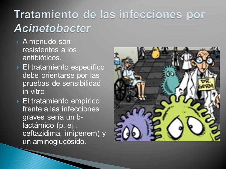 Tratamiento de las infecciones por Acinetobacter