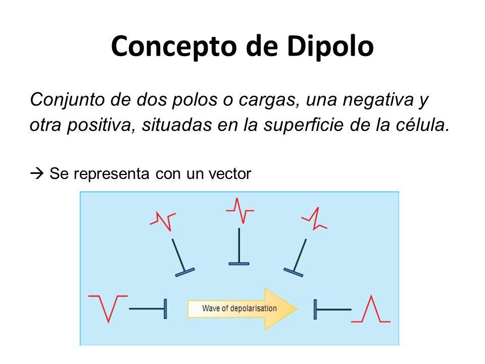 Concepto de Dipolo Conjunto de dos polos o cargas, una negativa y otra positiva, situadas en la superficie de la célula.