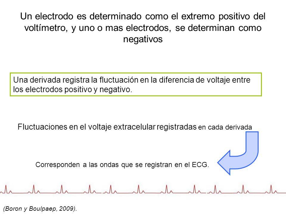 Un electrodo es determinado como el extremo positivo del voltímetro, y uno o mas electrodos, se determinan como negativos