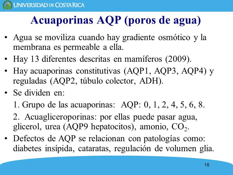 Acuaporinas AQP (poros de agua)