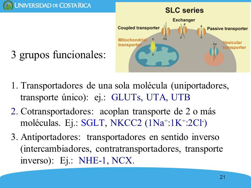 3 grupos funcionales: 1. Transportadores de una sola molécula (uniportadores, transporte único): ej.: GLUTs, UTA, UTB.
