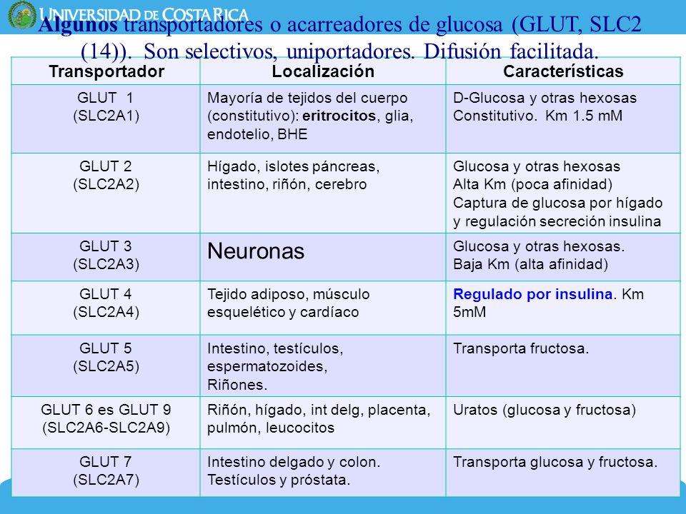 Algunos transportadores o acarreadores de glucosa (GLUT, SLC2 (14))