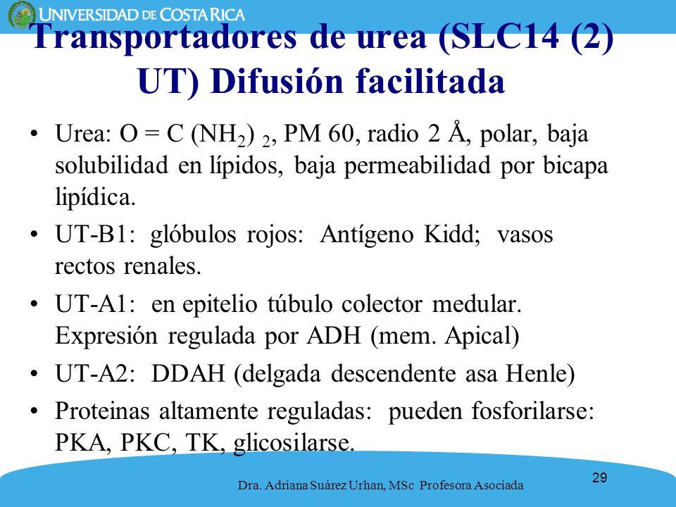 Transportadores de urea (SLC14 (2) UT) Difusión facilitada