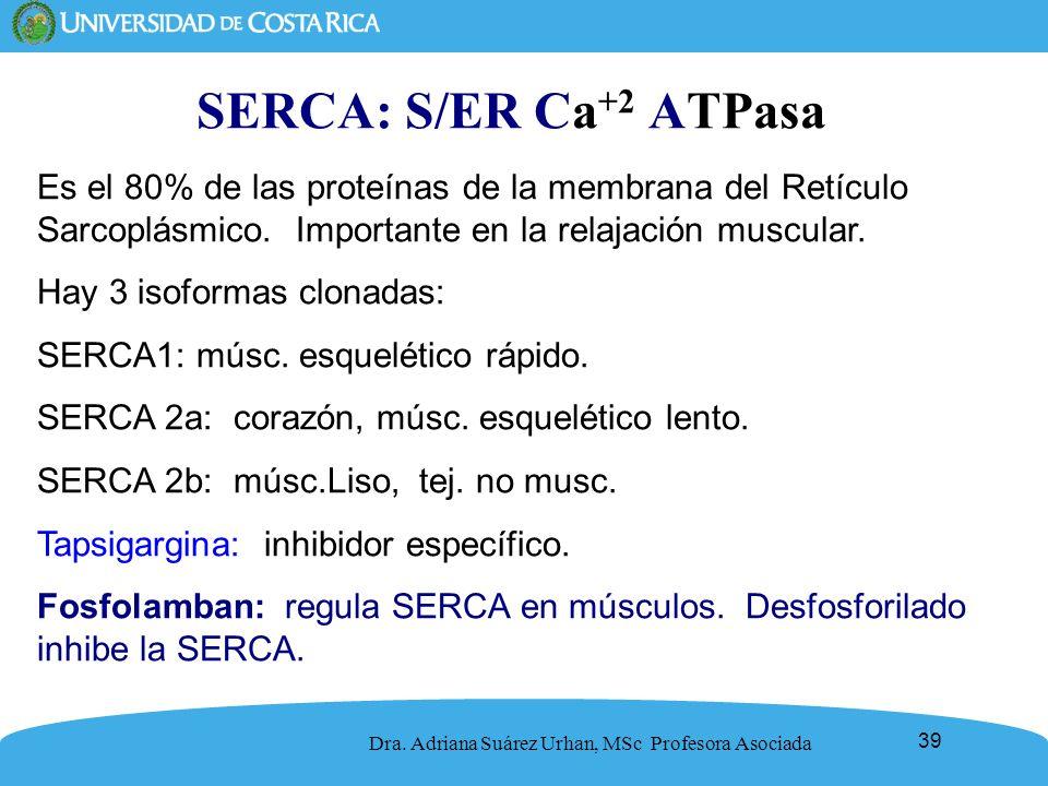 SERCA: S/ER Ca+2 ATPasa Es el 80% de las proteínas de la membrana del Retículo Sarcoplásmico. Importante en la relajación muscular.