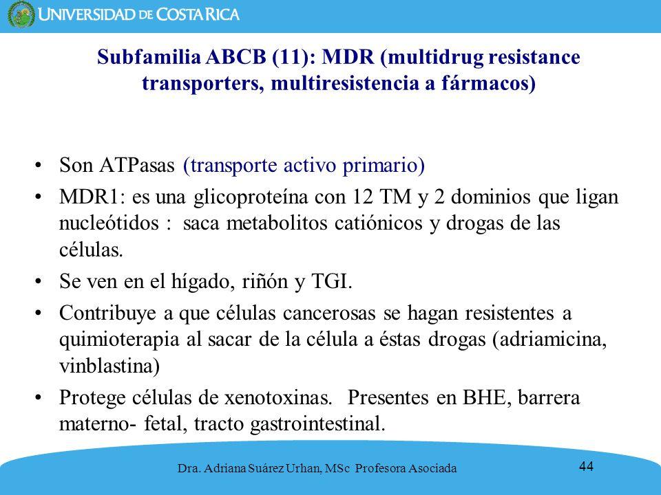 Son ATPasas (transporte activo primario)