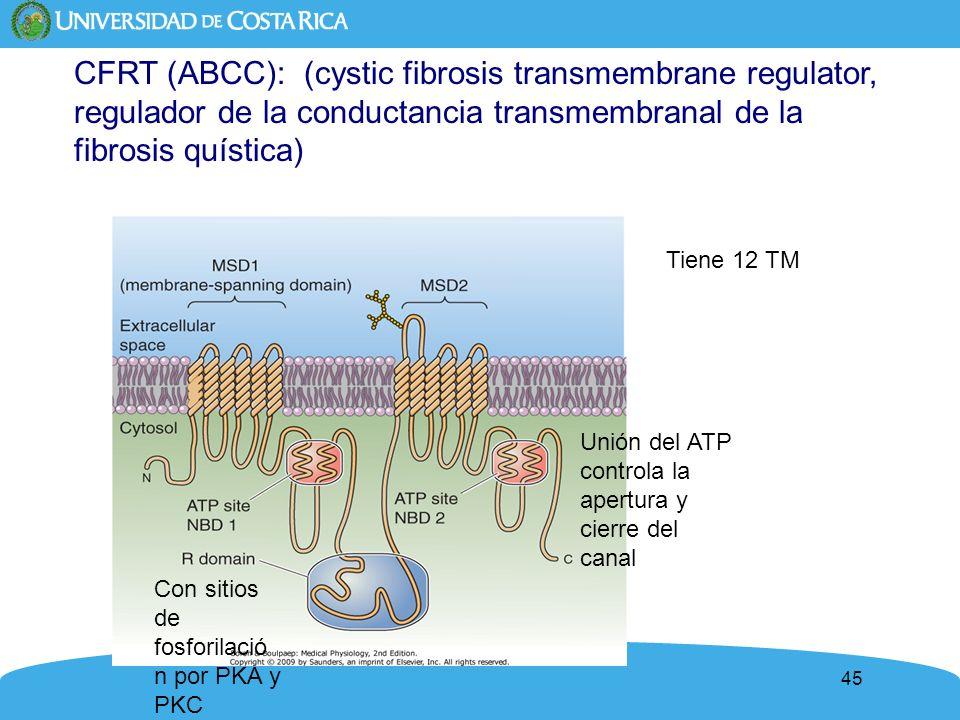 CFRT (ABCC): (cystic fibrosis transmembrane regulator, regulador de la conductancia transmembranal de la fibrosis quística)