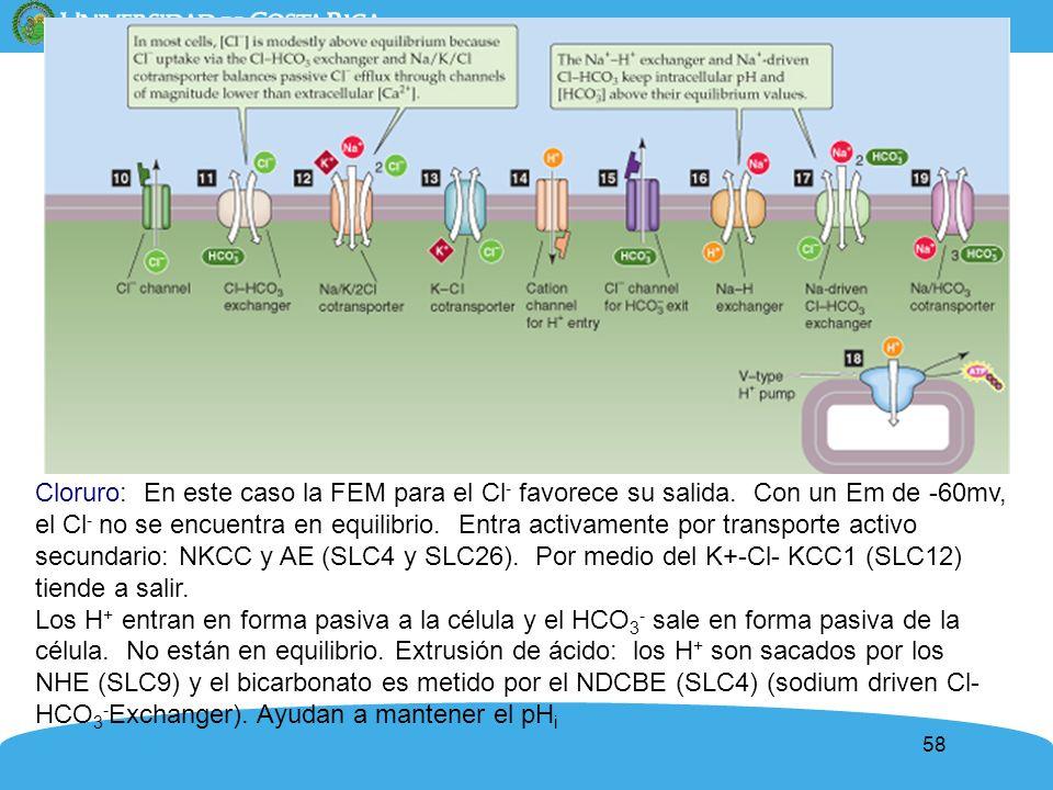Cloruro: En este caso la FEM para el Cl- favorece su salida