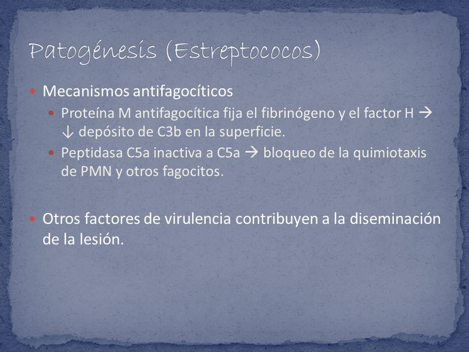 Patogénesis (Estreptococos)