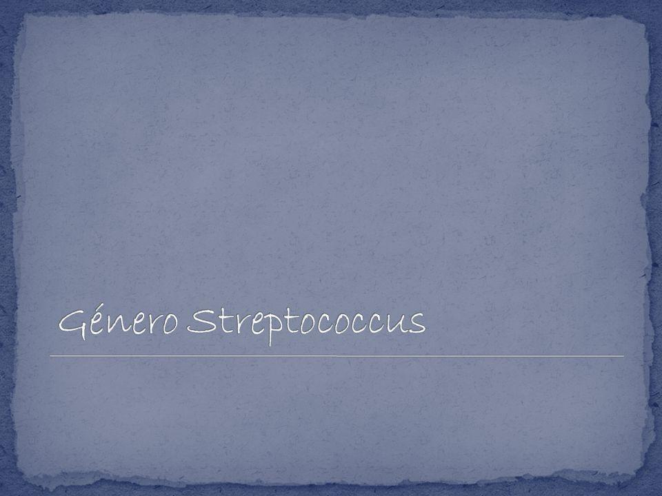 Género Streptococcus