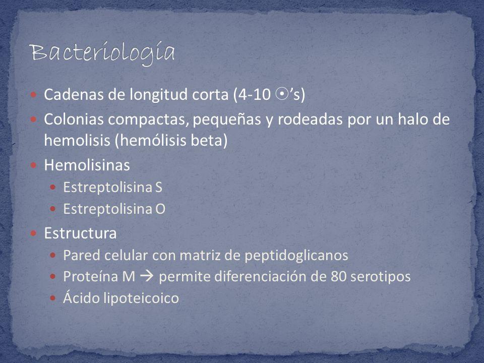 Bacteriología Cadenas de longitud corta (4-10 's)