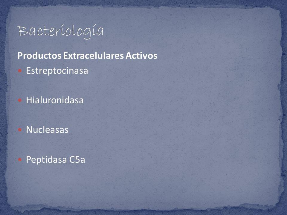 Bacteriología Productos Extracelulares Activos Estreptocinasa