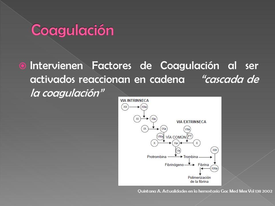 Coagulación Intervienen Factores de Coagulación al ser activados reaccionan en cadena cascada de la coagulación