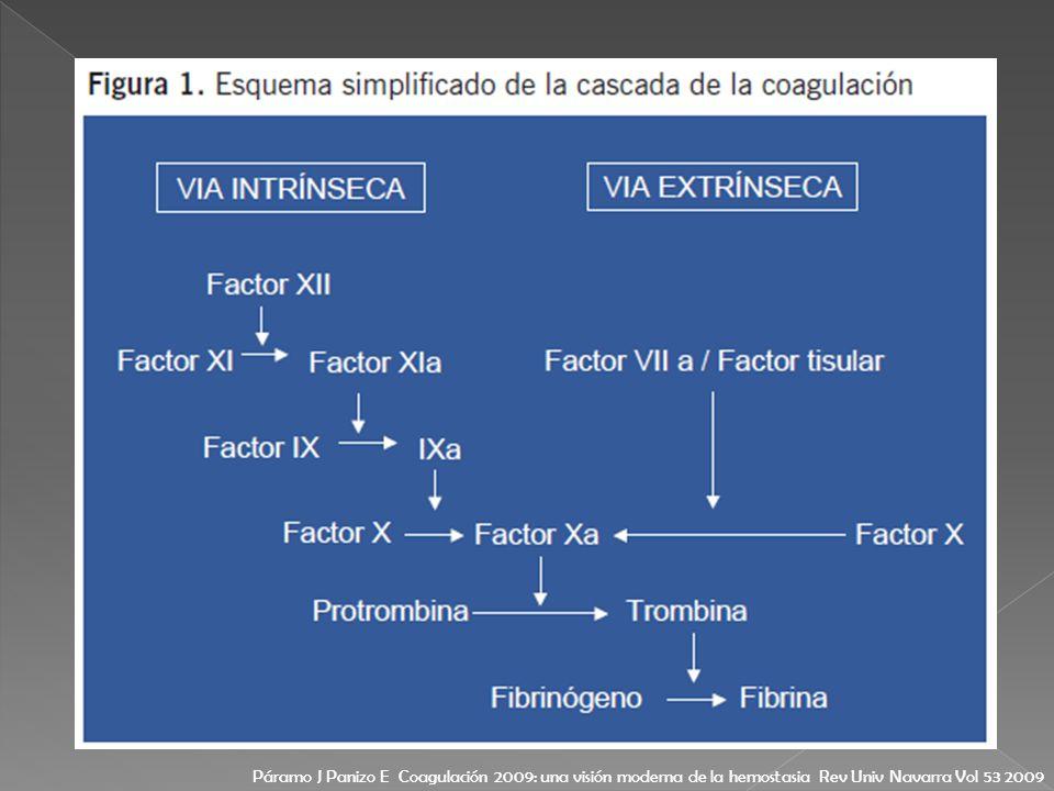 Páramo J Panizo E Coagulación 2009: una visión moderna de la hemostasia Rev Univ Navarra Vol 53 2009