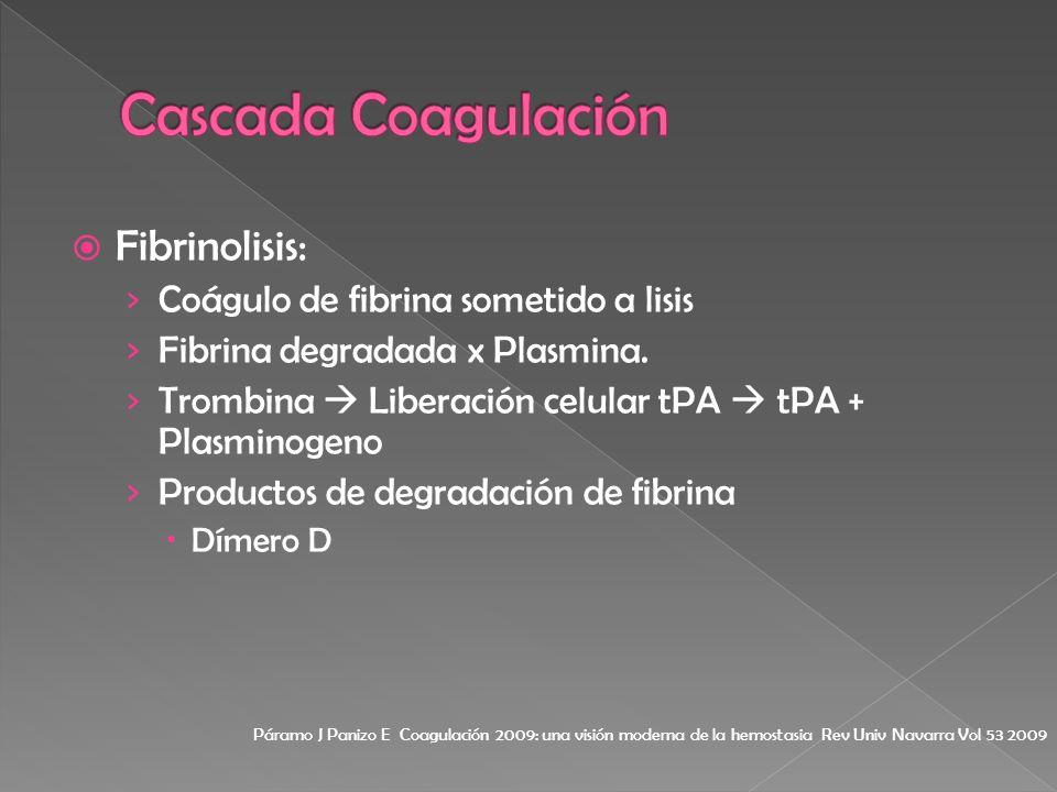Cascada Coagulación Fibrinolisis: Coágulo de fibrina sometido a lisis