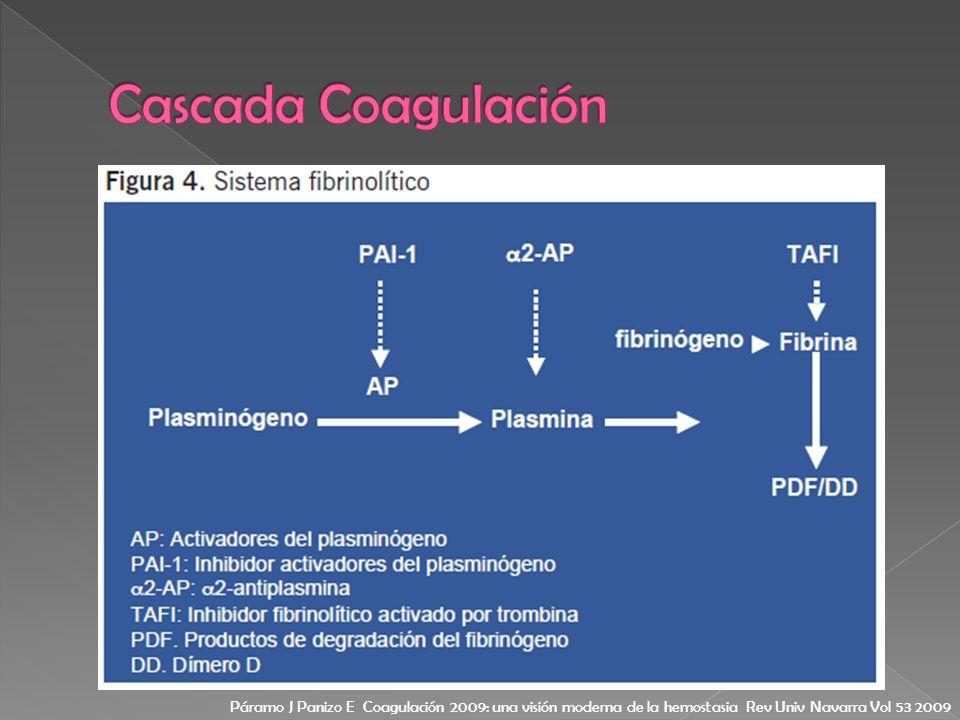Cascada Coagulación Páramo J Panizo E Coagulación 2009: una visión moderna de la hemostasia Rev Univ Navarra Vol 53 2009.