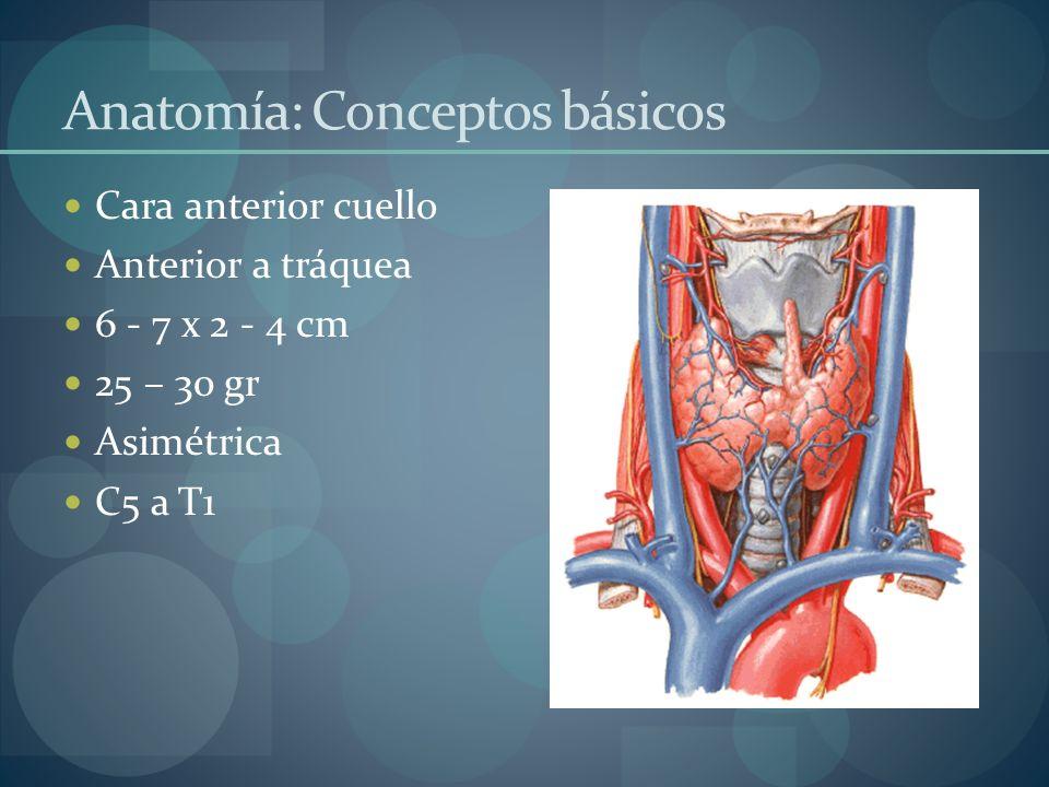Anatomía: Conceptos básicos
