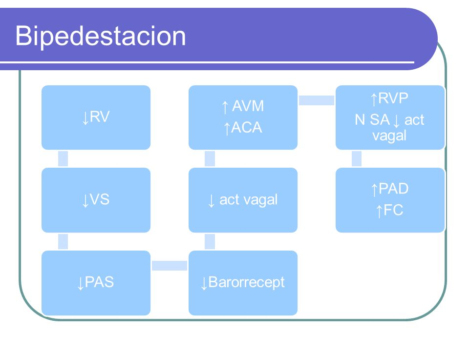 Bipedestacion ↓RV ↓VS ↓PAS ↓Barorrecept ↓ act vagal ↑ACA ↑ AVM