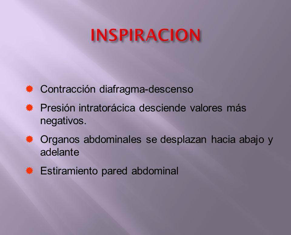INSPIRACION Contracción diafragma-descenso