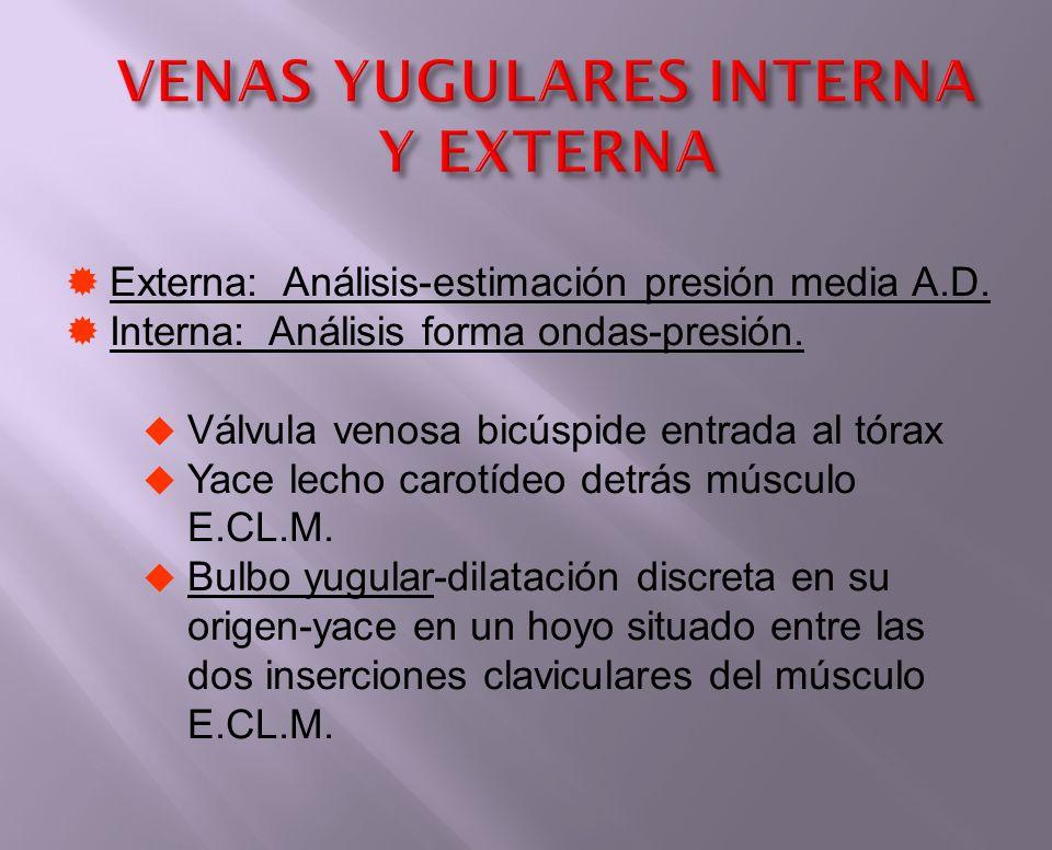 VENAS YUGULARES INTERNA Y EXTERNA