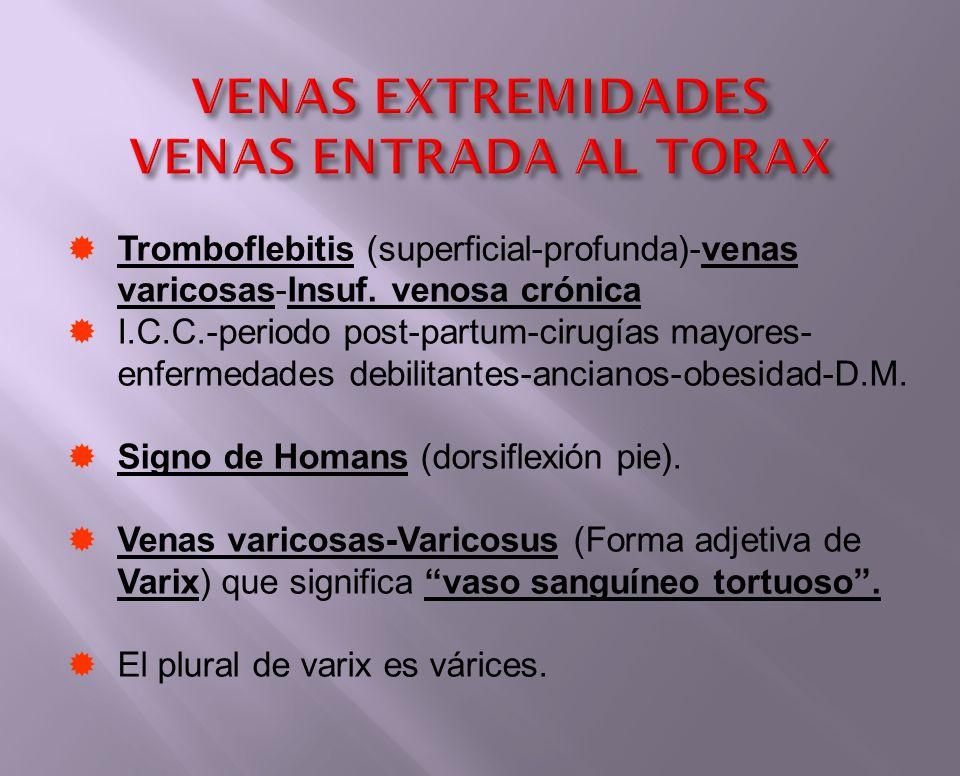 VENAS EXTREMIDADES VENAS ENTRADA AL TORAX