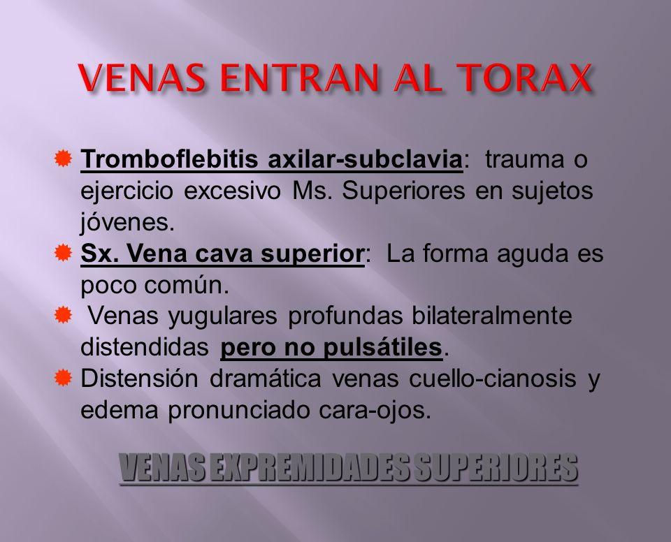 VENAS ENTRAN AL TORAX VENAS EXPREMIDADES SUPERIORES