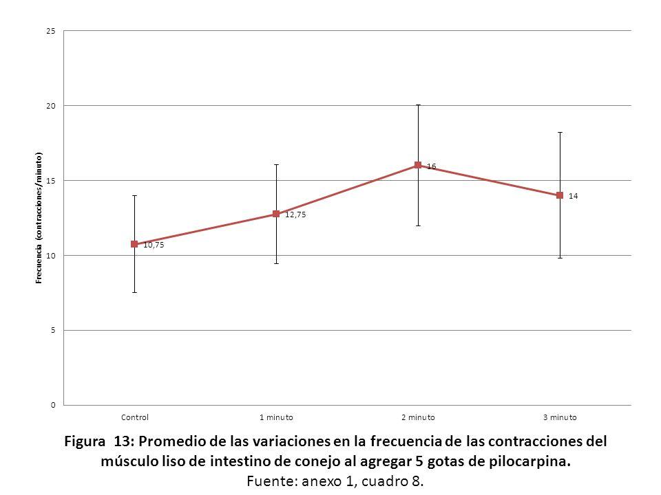Figura 13: Promedio de las variaciones en la frecuencia de las contracciones del músculo liso de intestino de conejo al agregar 5 gotas de pilocarpina.