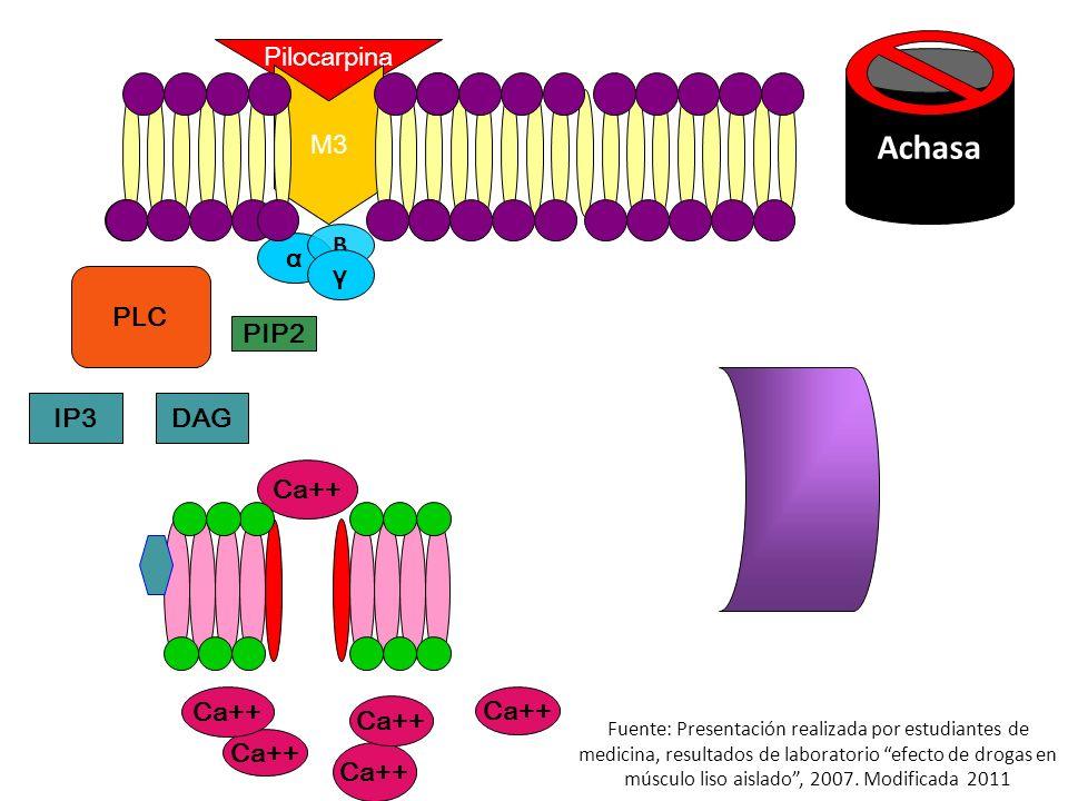 Achasa Calmodulina Pilocarpina M3 B α γ PLC PIP2 IP3 DAG Ca++ Ca++