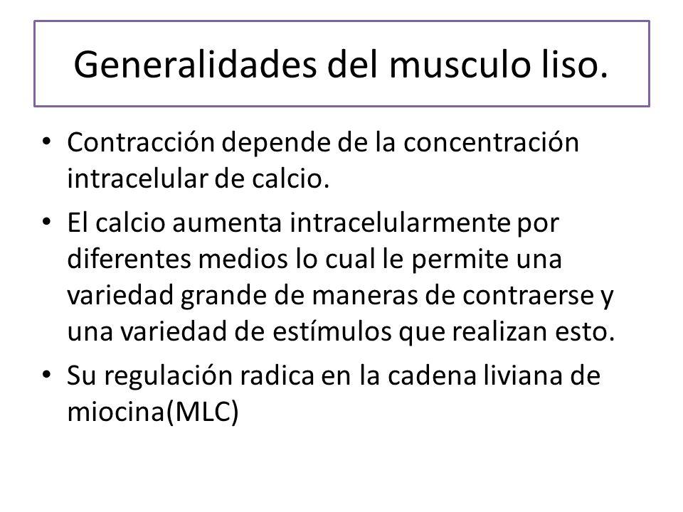 Generalidades del musculo liso.