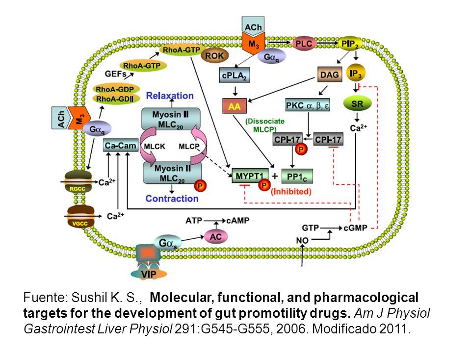 Atropina es un inhibidor competitivo de la ACh, pues tb se une a receptores M3