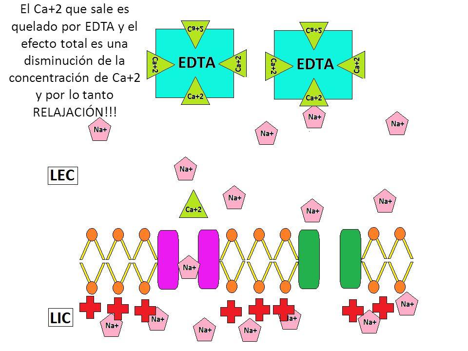 El Ca+2 que sale es quelado por EDTA y el efecto total es una disminución de la concentración de Ca+2 y por lo tanto RELAJACIÓN!!!