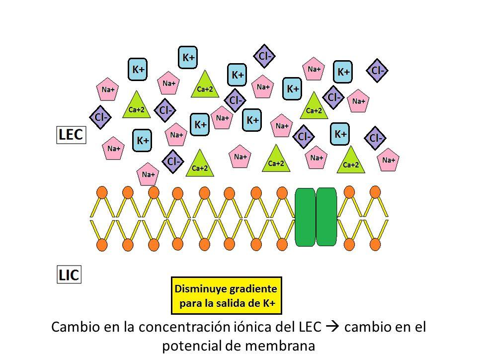 Cambio en la concentración iónica del LEC  cambio en el potencial de membrana