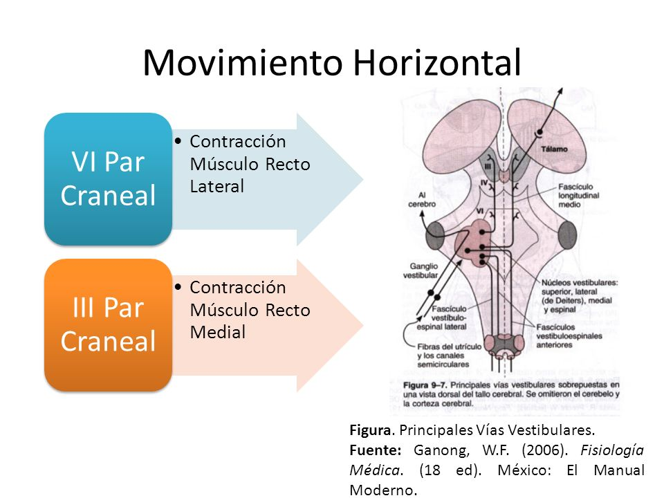 Movimiento Horizontal
