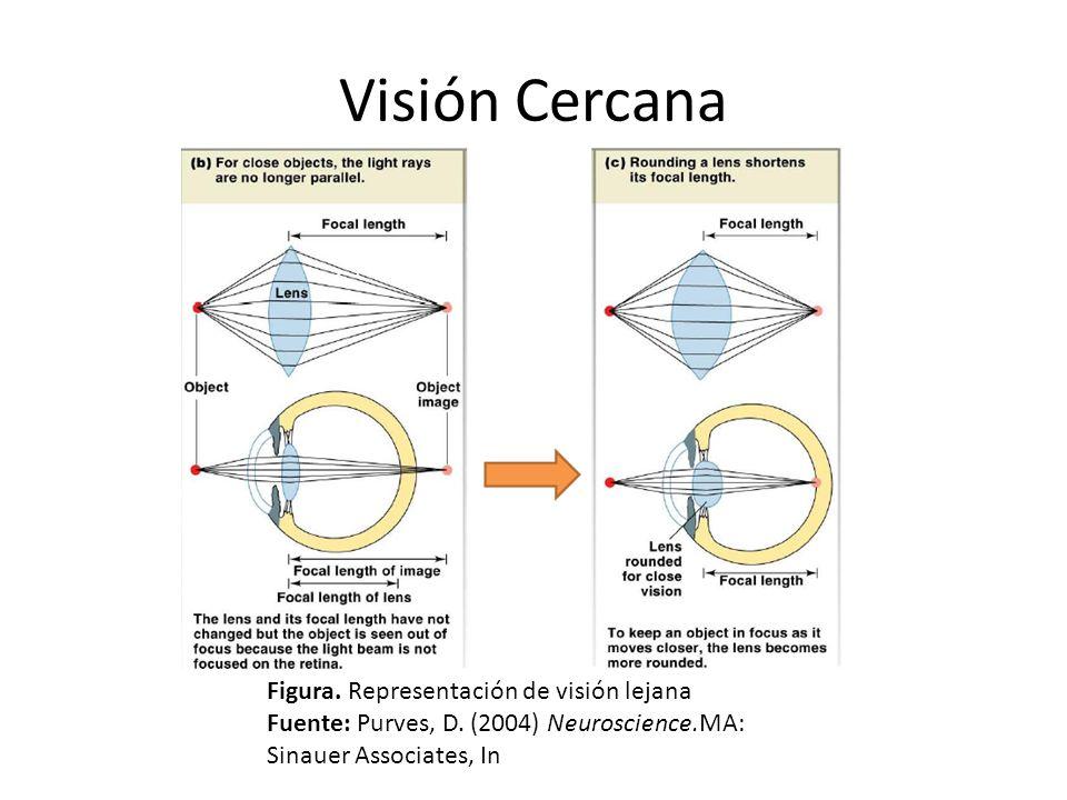 Visión Cercana Figura. Representación de visión lejana