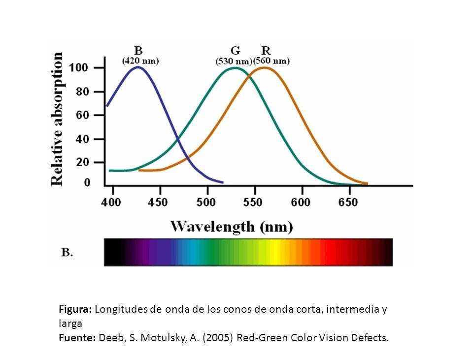Figura: Longitudes de onda de los conos de onda corta, intermedia y larga