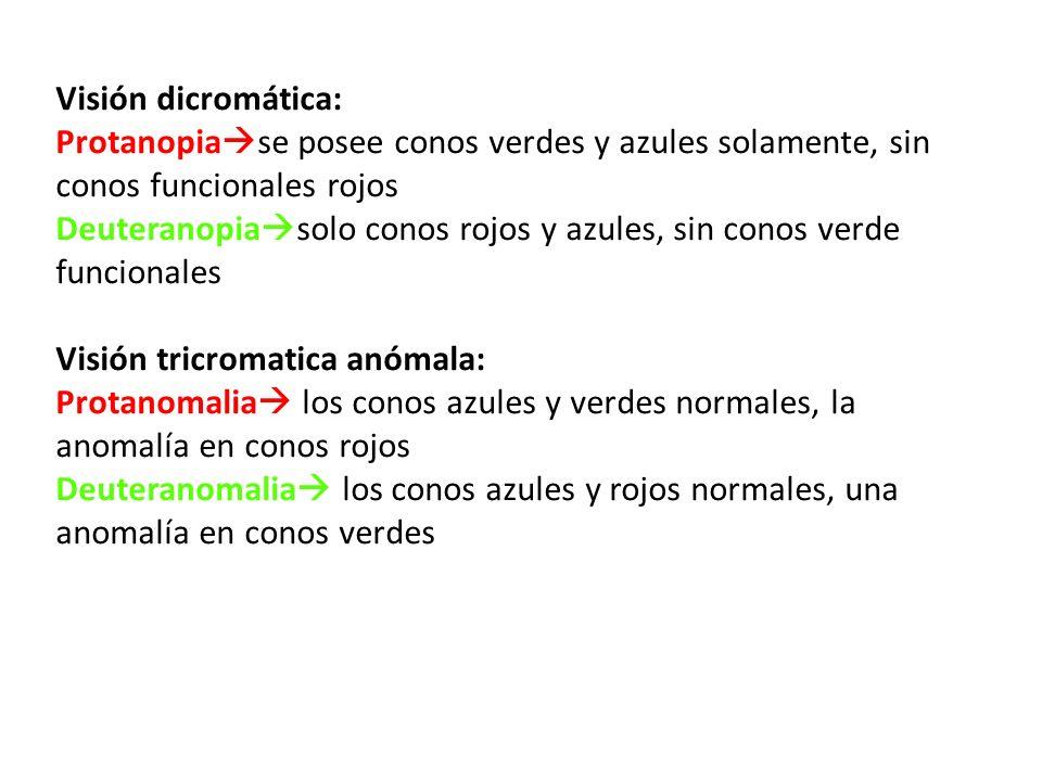 Visión dicromática: Protanopiase posee conos verdes y azules solamente, sin conos funcionales rojos.