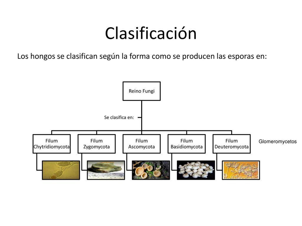 Chytridiomycota fungi