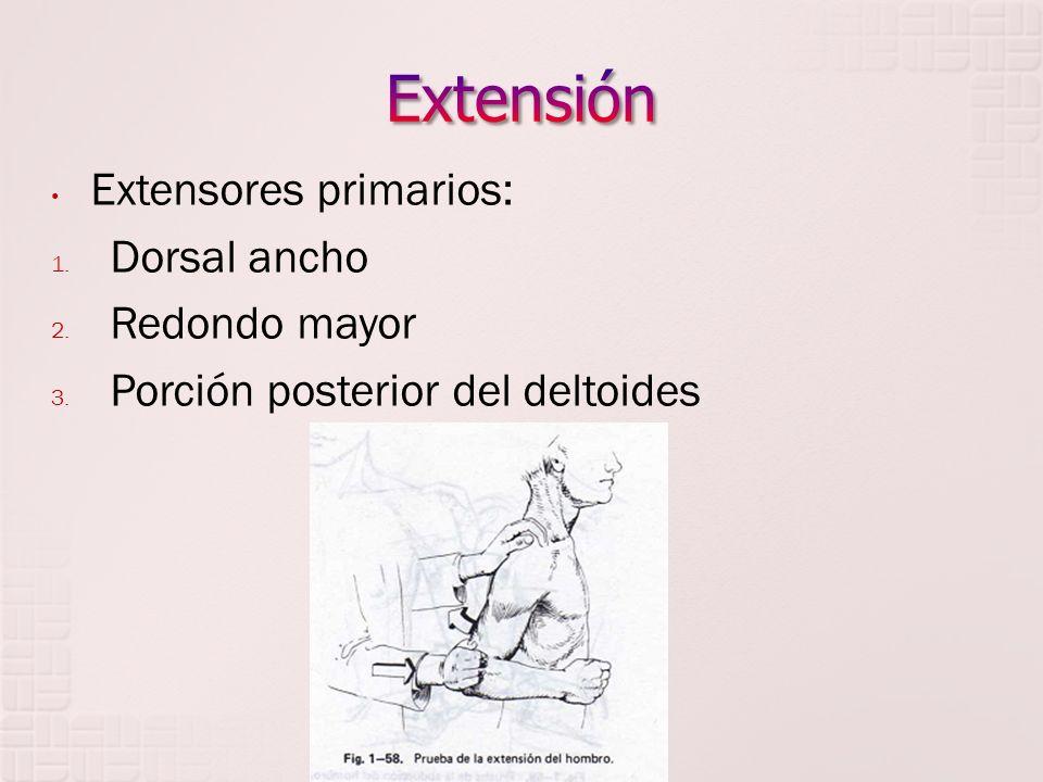 Extensión Extensores primarios: Dorsal ancho Redondo mayor
