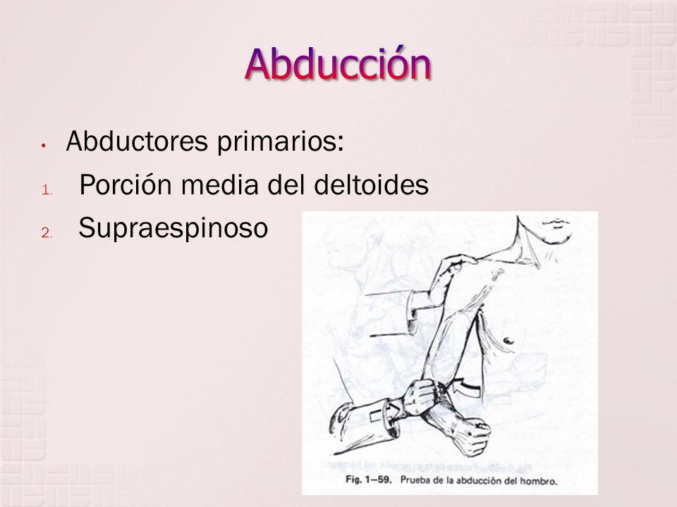 Abducción Abductores primarios: Porción media del deltoides