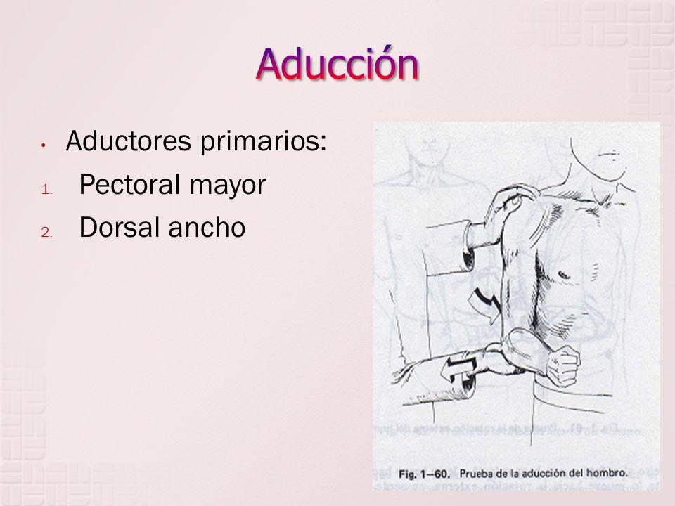 Aducción Aductores primarios: Pectoral mayor Dorsal ancho