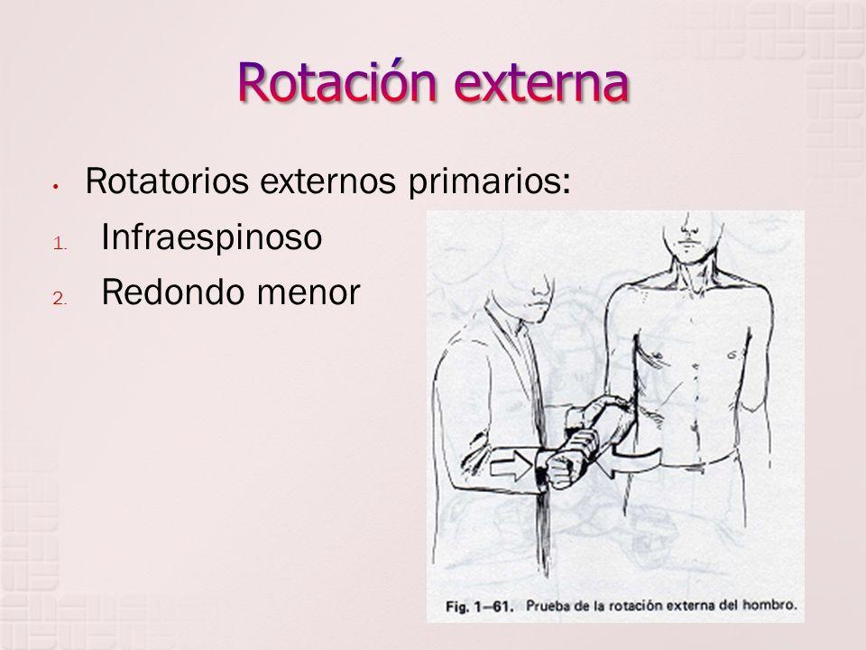 Rotación externa Rotatorios externos primarios: Infraespinoso