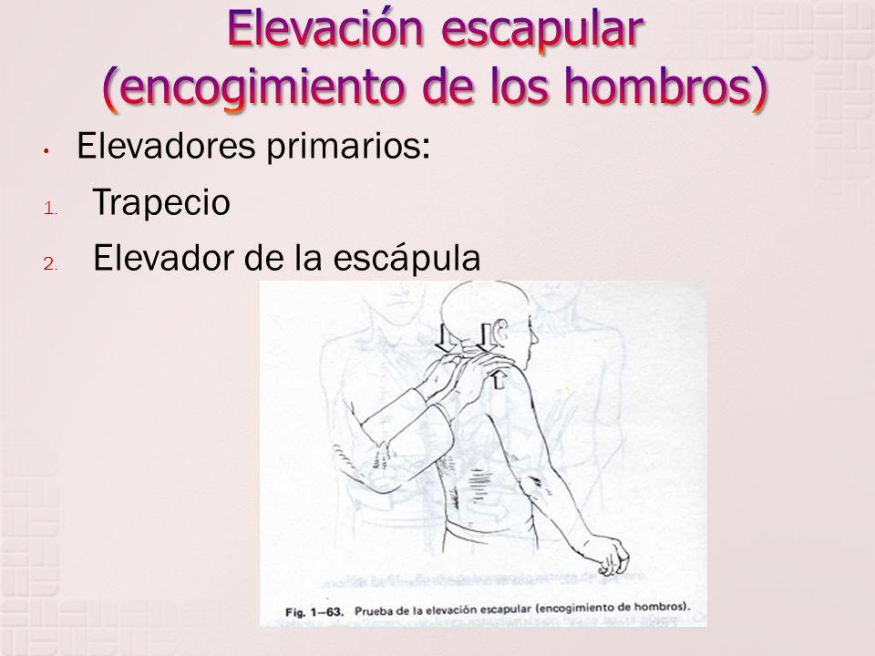 Elevación escapular (encogimiento de los hombros)