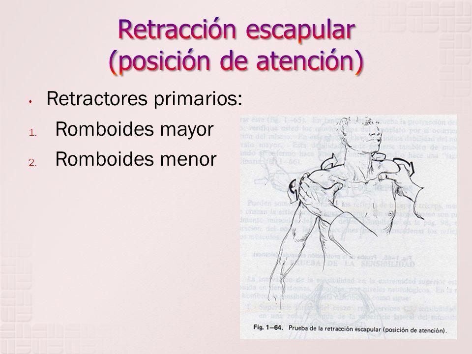 Retracción escapular (posición de atención)